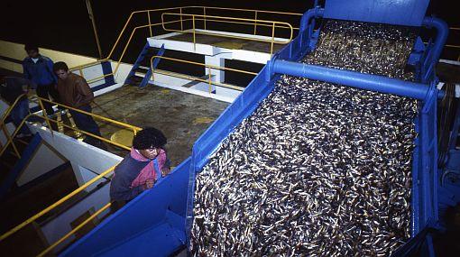 SNP: Fallo no incrementará la captura de anchoveta en Perú