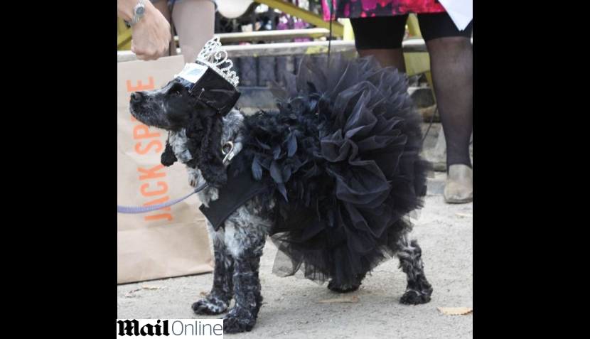FOTOS: perros disfrazados para Halloween desfilaron en Estados Unidos
