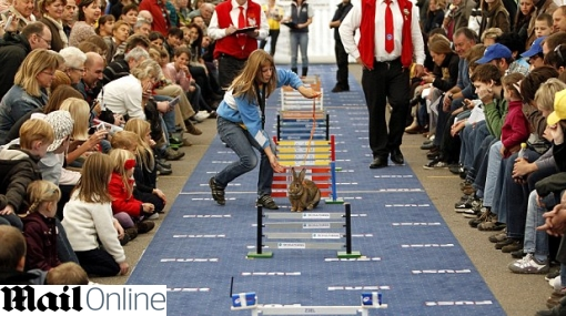 Carrera de obstáculos para conejos causa sensación en Suiza