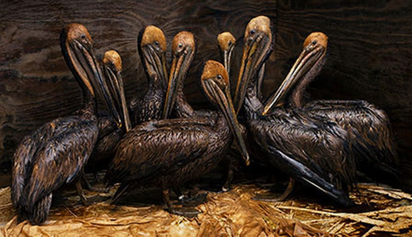 FOTOS: las mejores imágenes del concurso Fotógrafo de Vida Silvestre 2011