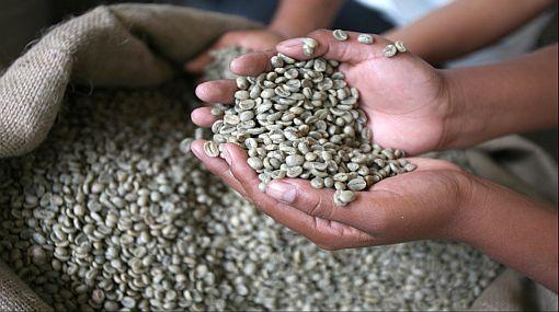 Exportaciones de café peruano sufrirían contracción de 15% este año