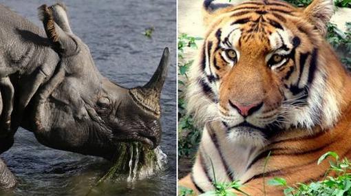 Solo algunas especies podrán salvarse de la extinción