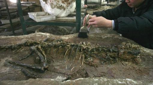 Descubren restos fósiles de 15 crías de dinosaurio en Mongolia
