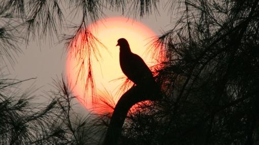 Ruido de la actividad humana afecta principalmente a las aves grandes