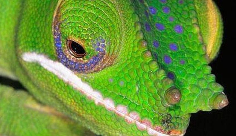 FOTOS: los diez animales más raros del 2011, según National Geographic