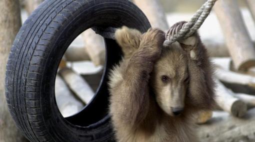 El zoológico de Kabul, un área de resistencia animal en Afganistán