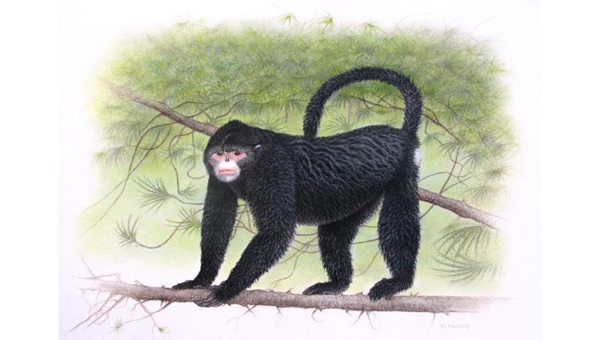 FOTOS: el mono 'Elvis' y otras especies recién descubiertas en Asia