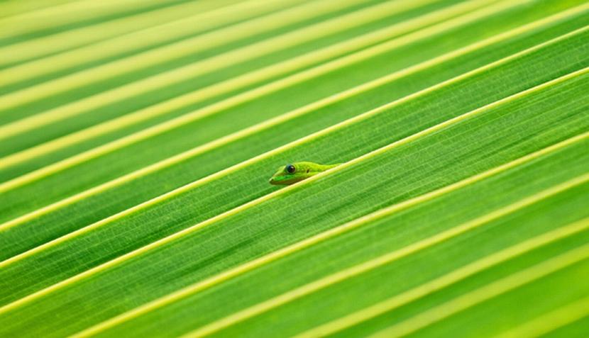 Imágenes del concurso de Fotografía Natural 2011