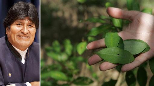 Bolivia batió su récord de destrucción de droga