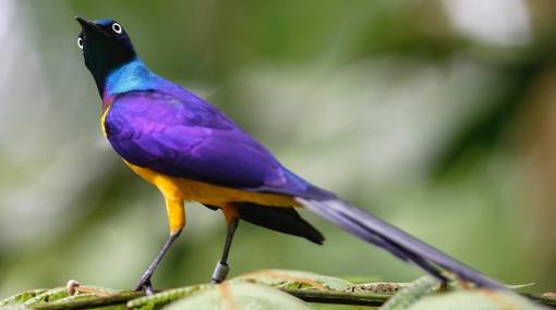 EE.UU. no incluyó en su lista roja a más de 500 especies amenzadas