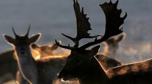El mayor rebaño de renos del mundo se redujo 87% en diez años