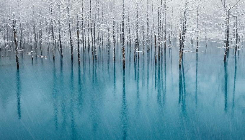 Las imágenes ganadoras del concurso de fotografía natural de National Geographic