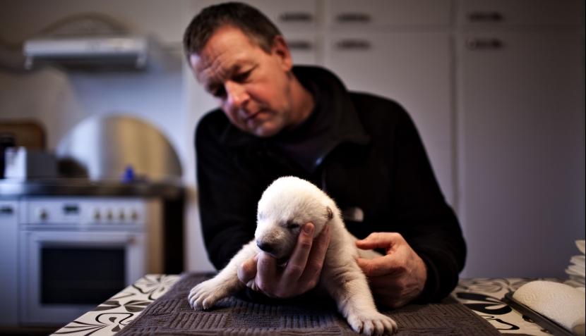 Siku, el tierno oso polar que lucha por sobrevivir en cautiverio
