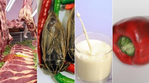 Conoce algunos alimentos considerados tabú en el mundo