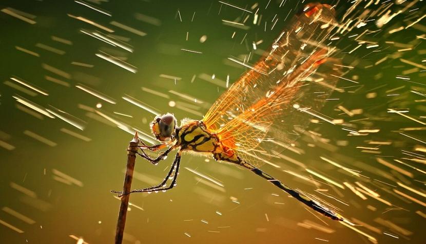 Estas imágenes ganaron concursos de fotografía natural durante el 2011