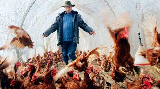 Nuevo caso de muerte por gripe aviar en China tras año y medio
