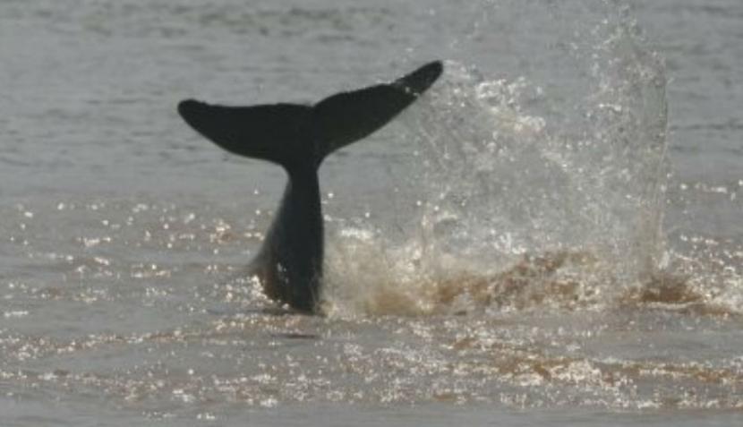Estos son los animales más amenazados para el 2012, según la WWF