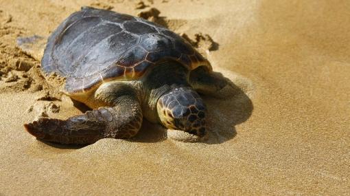 Ex cazadores de tortugas ahora velan por ellas en los mares de Filipinas