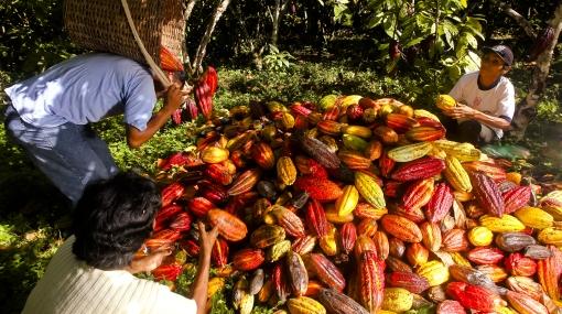 Por la ruta del sabor: viaje al paraíso cacaotero