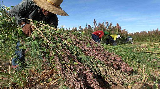 Estado puede fijar límites a la propiedad agrícola, afirma el Minag