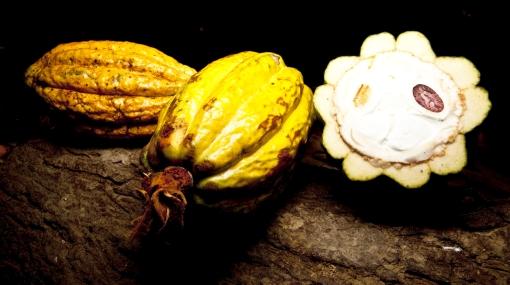 La cáscara de cacao, un arma para combatir la desnutrición