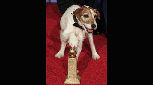 Uggie, el perro que conquistó los Globos de Oro, se retira del cine