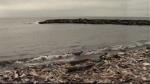 Playas del Callao contaminadas por desmonte de construcciones - Noticias de pio salazar