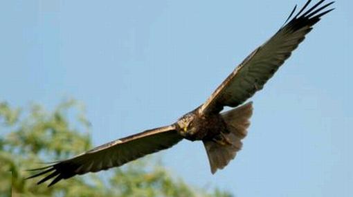 Multan a un granjero que aseguró haber hallado nueva especie de halcón