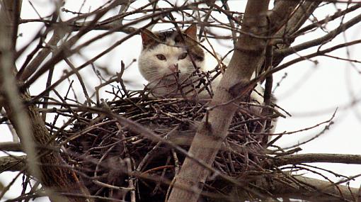 Gatos fueron erradicados de 83 islas por amenazar a otras especies