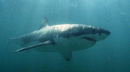"""""""En el Perú comemos tiburón todos los días"""""""