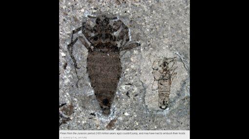 """Las pulgas más antiguas del mundo eran """"gigantes"""" y vivían en China"""