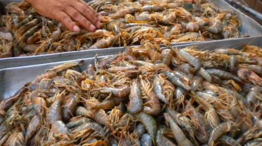 Tonelada y media de camarón peruano fue requisada en Ecuador