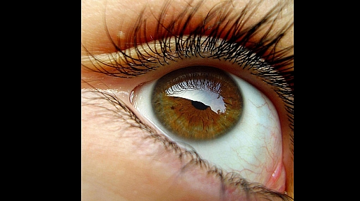 Científicos lograron cultivar células madre en córneas humanas dañadas