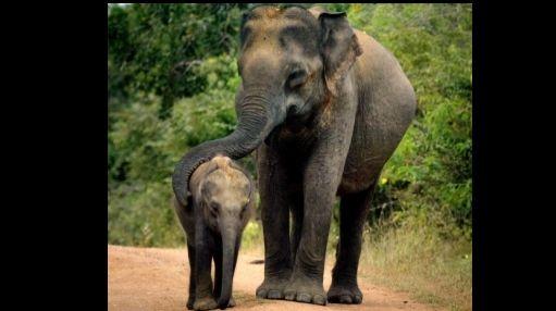 Camerún: 128 elefantes fueron asesinados desde el mes de enero