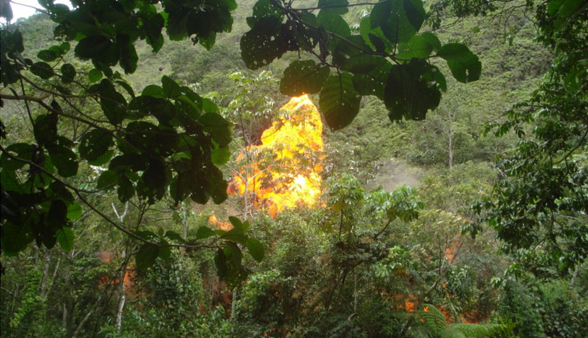 Tingo María: imágenes de la operación antidrogas que destruyó laboratorios de PBC