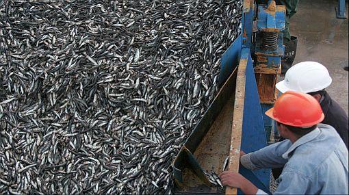 Exalmar acusa a gremio pesquero por trato discriminatorio