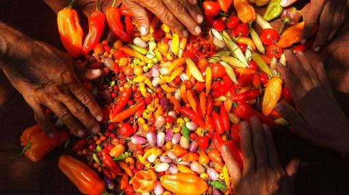 Los peruanos consumimos más de 17 mil toneladas de ají al año