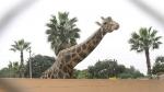 Conoce a los nuevos animales del Parque de las Leyendas - Noticias de naylamp