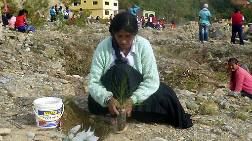 Huánuco: reforestan zona donde el 2010 un alud sepultó a 50 personas