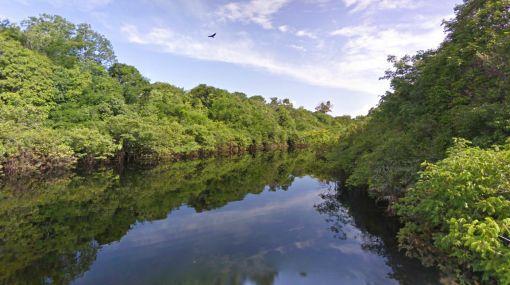 El Amazonas visto a ras del suelo gracias a Street View