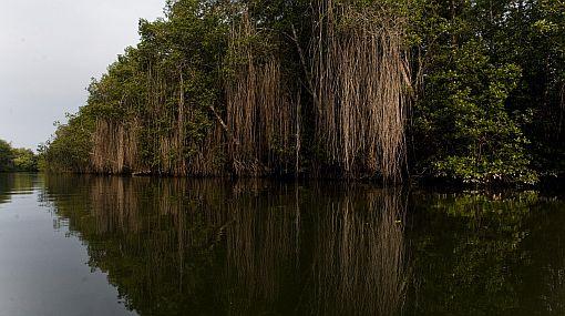 El futuro de los corales, los manglares y el tigre es poco alentador