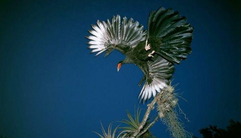 FOTOS: la naturaleza desde el lente de Heinz Plenge