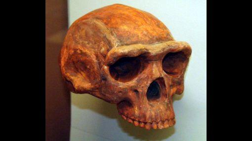 El Homo erectus ya sufría de tuberculosis hace medio millón de años