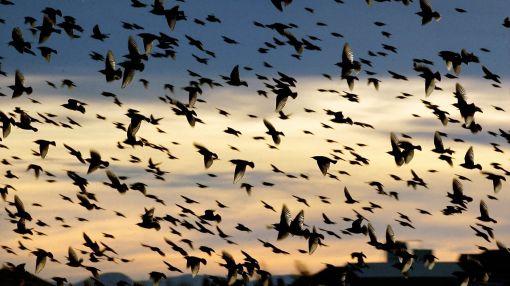 Siete millones de aves mueren al año por torres de telecomunicaciones en EE.UU.