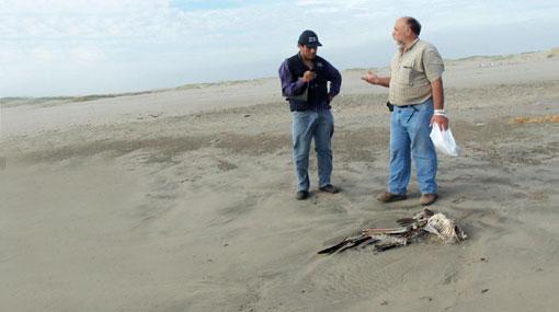 Minag descartó que pelícanos hayan muerto por gripe aviar