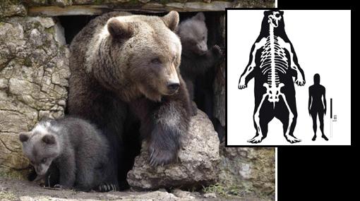 Así fue el oso más grande de la historia