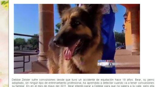 """Un perro es nombrado """"héroe nacional"""" por salvar a su dueña"""