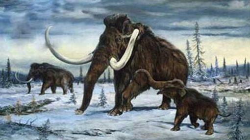 Resultado de imagen de Especies desaparecidas