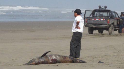 Muerte de delfines se debió a causa natural y no humana, asegura Produce