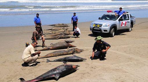 """Patricia Majluf: """"Aún no sabemos qué mató a los delfines"""""""